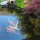 Искусственный пруд на дачном участке